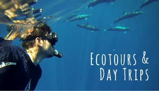 Ecotours & Day trips