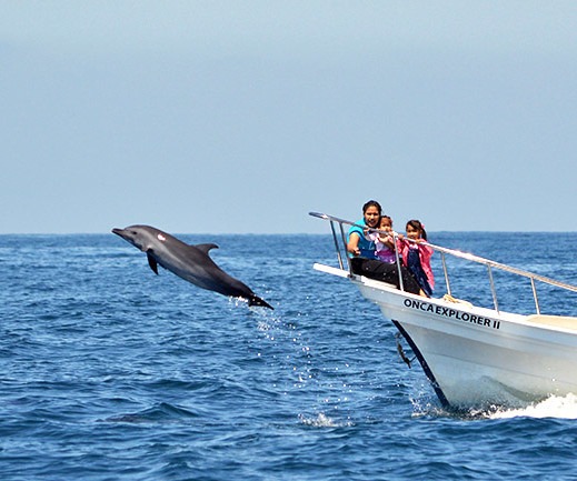 delfines13-e1562526691116
