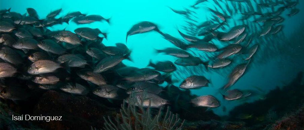 Buceo Isabel 3