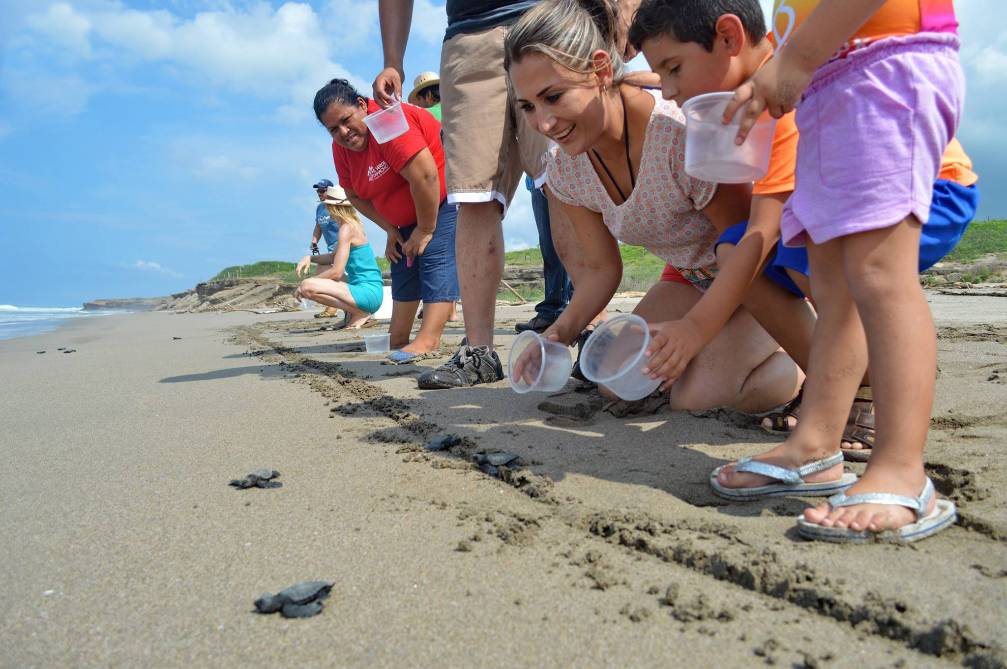 Sea turtle hatchling release Mazatlan with Onca