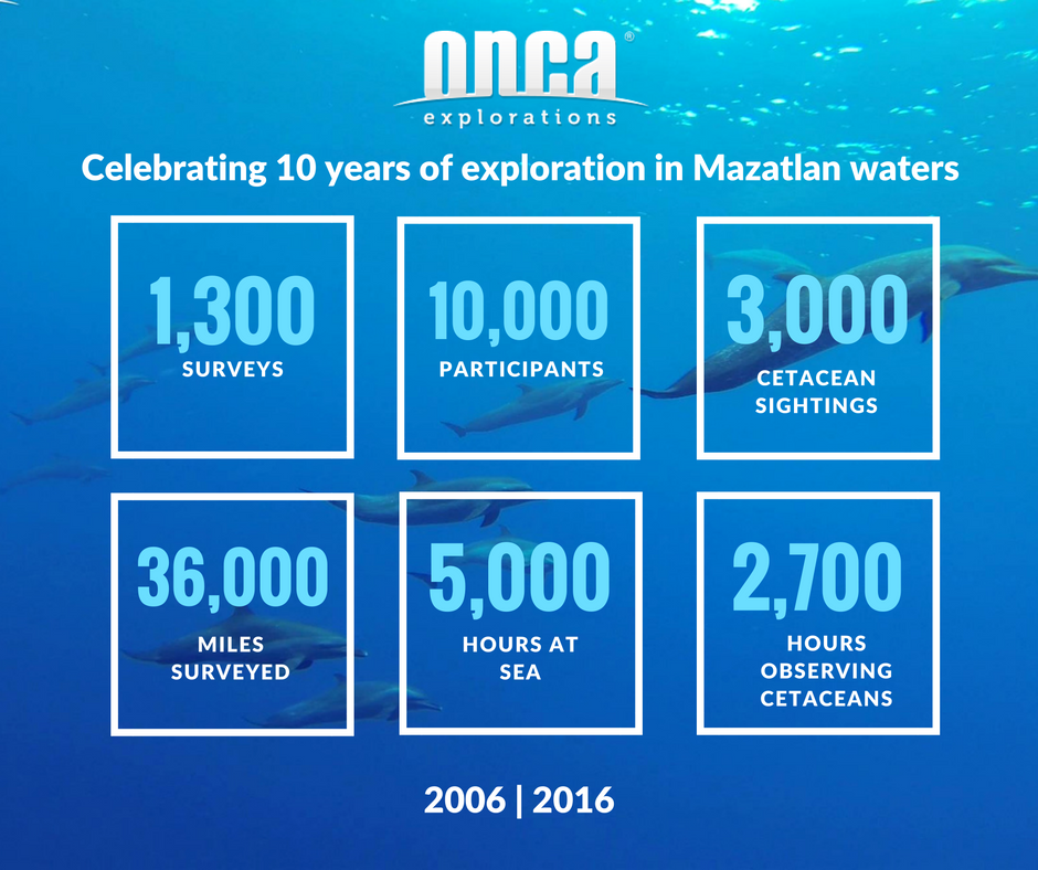 onca in numbers