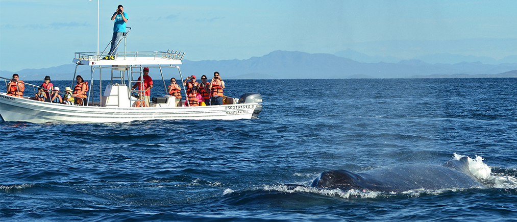 whalewatchwithexperts
