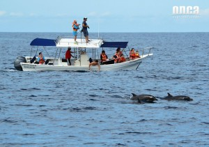 Dolphin ecology project Mazatlan citizen science